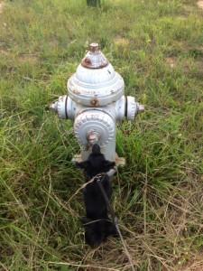 POLLYFire hydrant