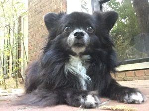 fletch-paws-fwd-on-porch